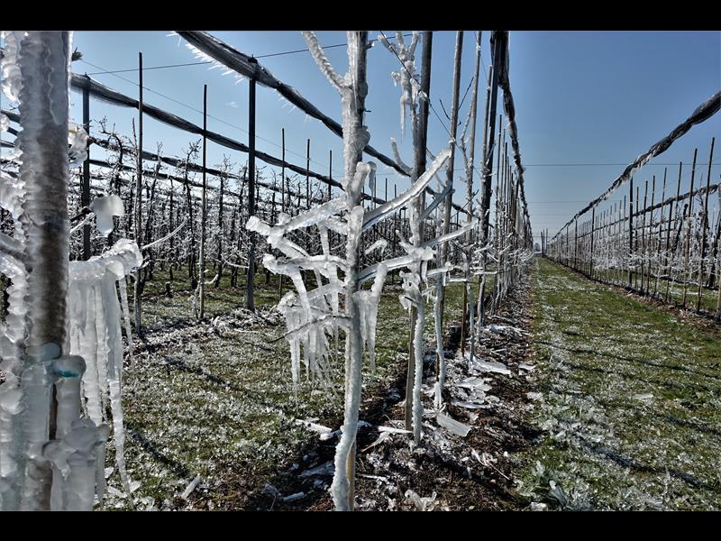 Eis schützt vor Kälte (Copy)